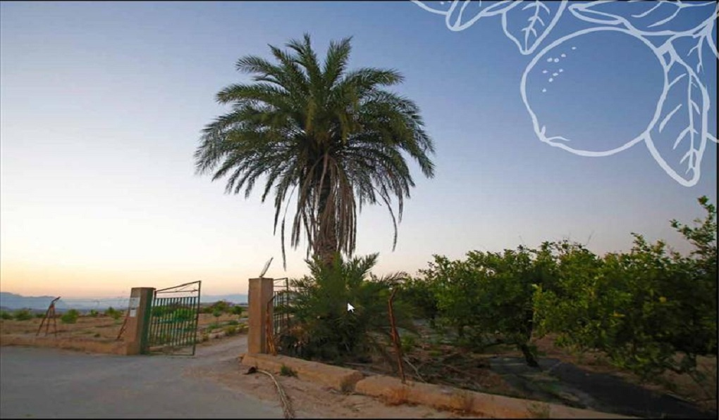 Land Land for Sale in Algorfa
